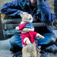Уличный певец