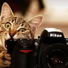 кот и фотоаппарат