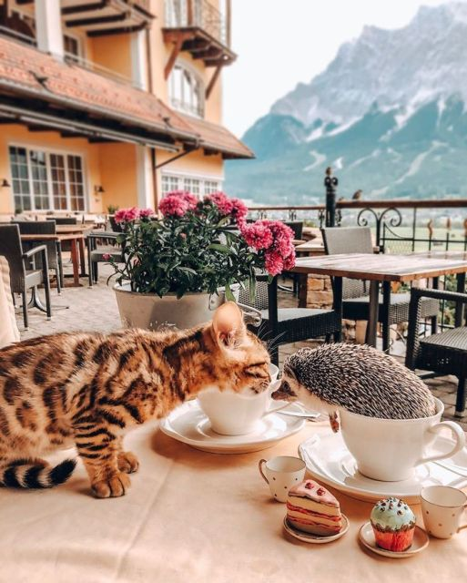 еж Герби и кошка Одри