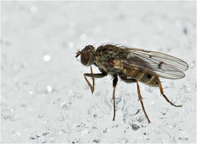 муха на снегу