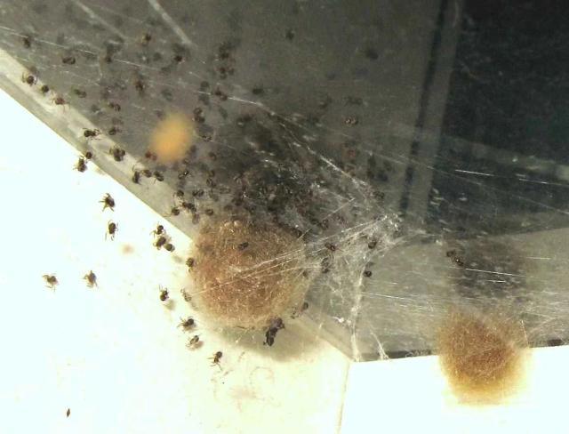 Как оказалось, приход весны знаменуют не только грачи, но и пауки