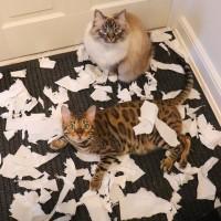 Котики - это спокойствие и уют в доме